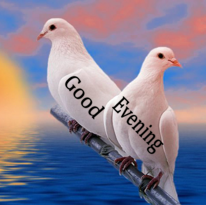 Good Evening image wishes a bird