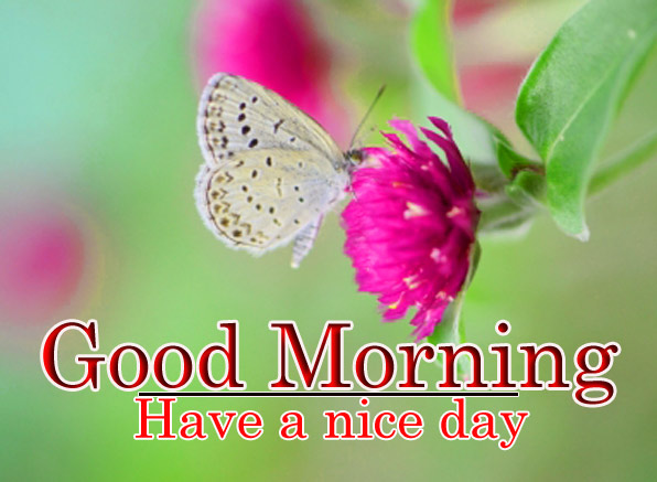 Good Morning and have a nice day butter with flower image