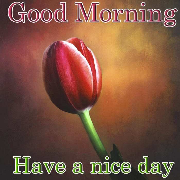 Good Morning and have a nice day image tulips image