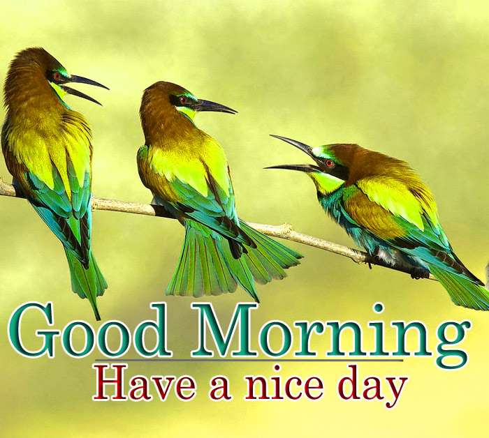 Good Morning and have a nice day ture sparrow bird pic