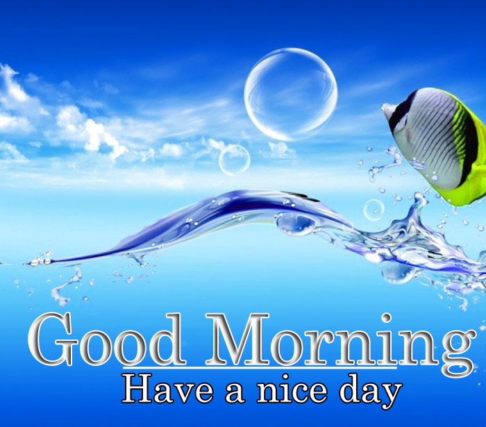Good Morning and have a nice day water in fish image