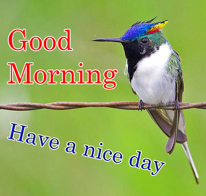 Good Morning and have a nice day wishe beautiful bird image