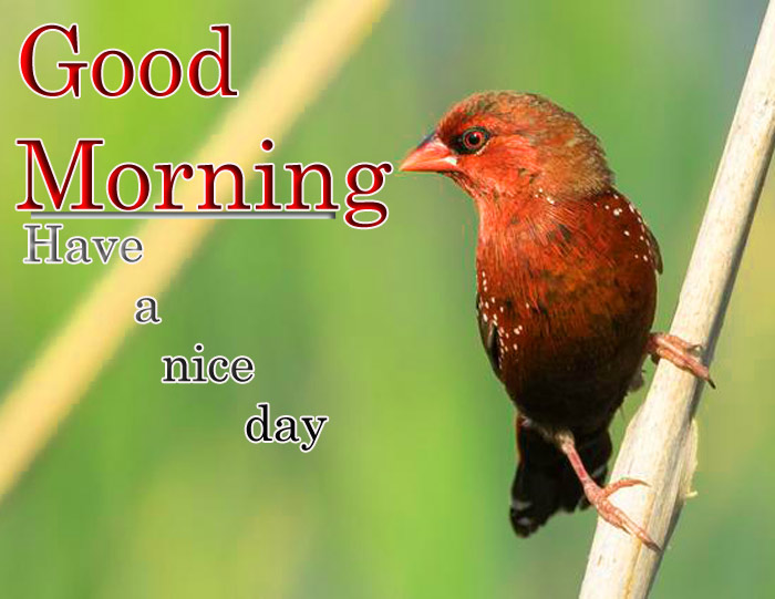 Good Morning and have a nice day wishe sparrow image