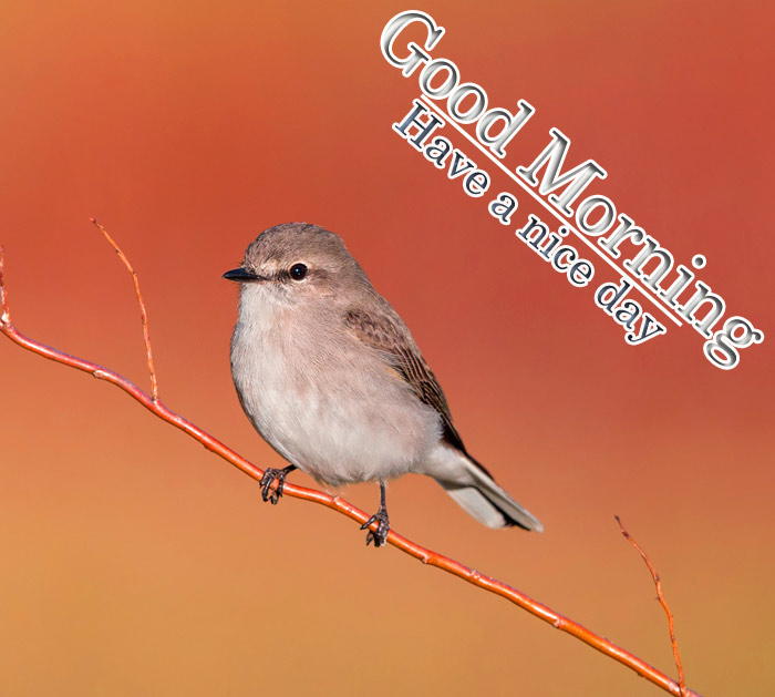 Good Morning and have a nice day with a sparrow bird