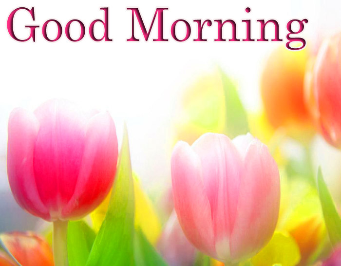 Good Morning beautiful a color flower image