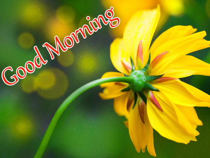 Good Morning beautiful with a flower image