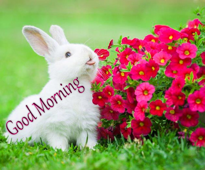 Good Morning cute rabbit with flower image