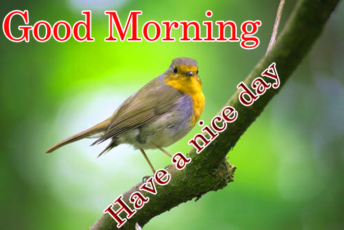 Good Morning have a nice day bird crooner image
