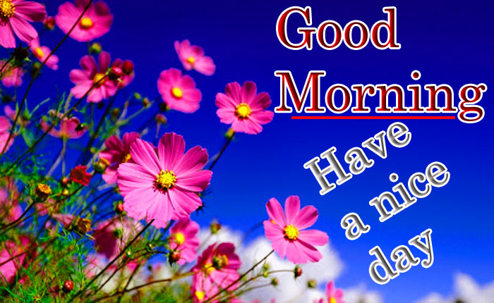 Good Morning have a nice day image lily flower image