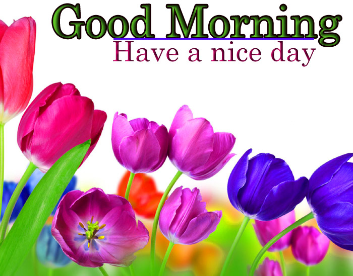 Good Morning have a nice day with purpal tulips flower image