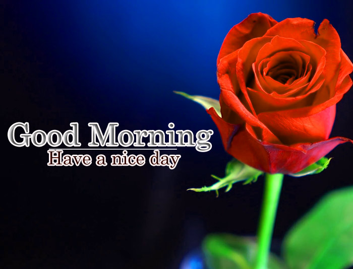 Good Morning have a nice day with rose flower image
