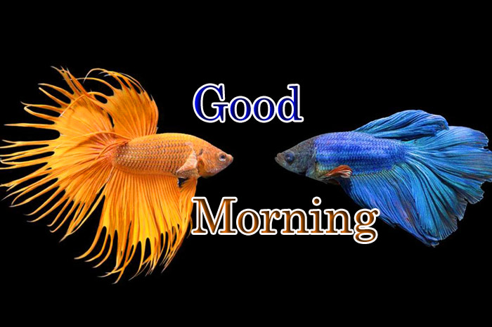 Good Morning image with a Fish