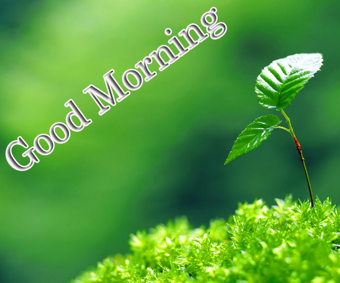 Good Morning images with a flower leaf and grass