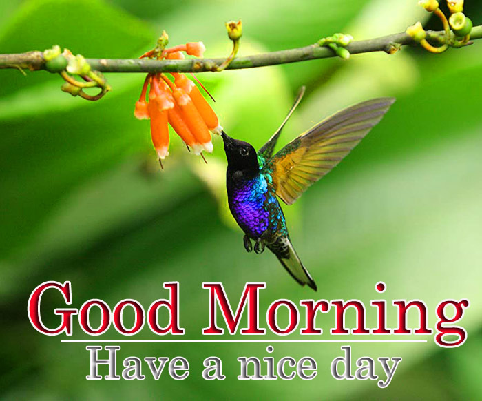 Good Morning images with a flowers and bird