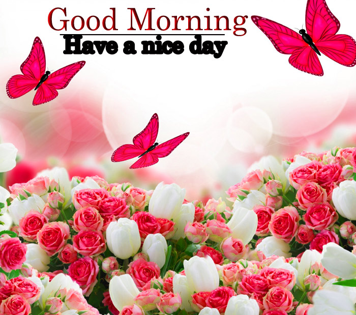 Good Morning images with a flowers rose and butterfly