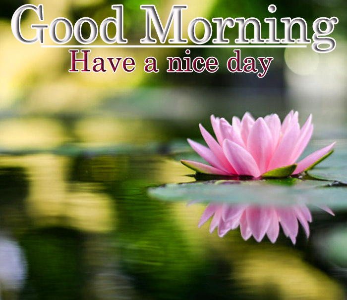 Good Morning images with a lotus flowers