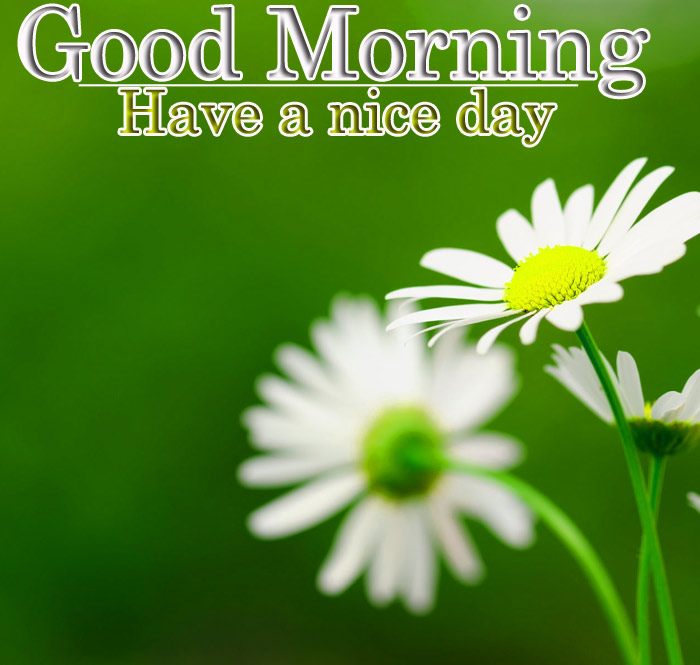 Good Morning images with a white flowers