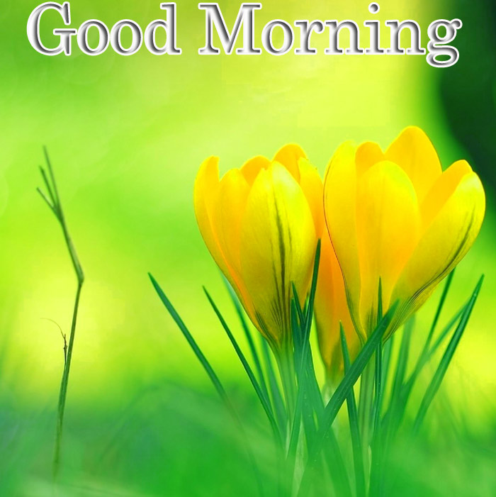 Good Morning images with a yellow flowers