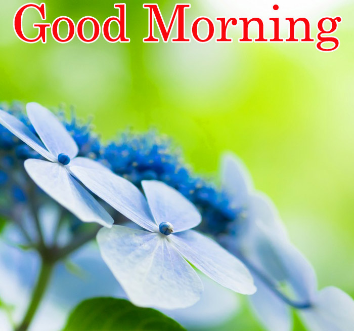 Good Morning images with blue flowers