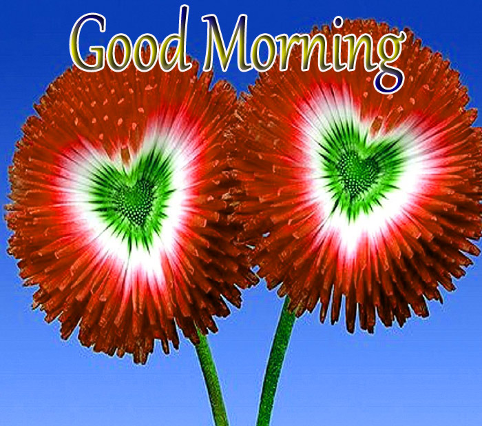 Good Morning wishes a beautiful flower image