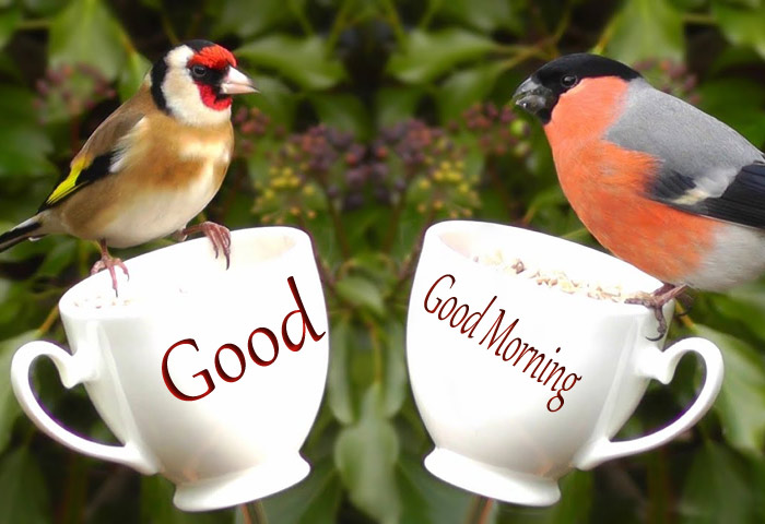 Good Morning wishes bird a white cup pic