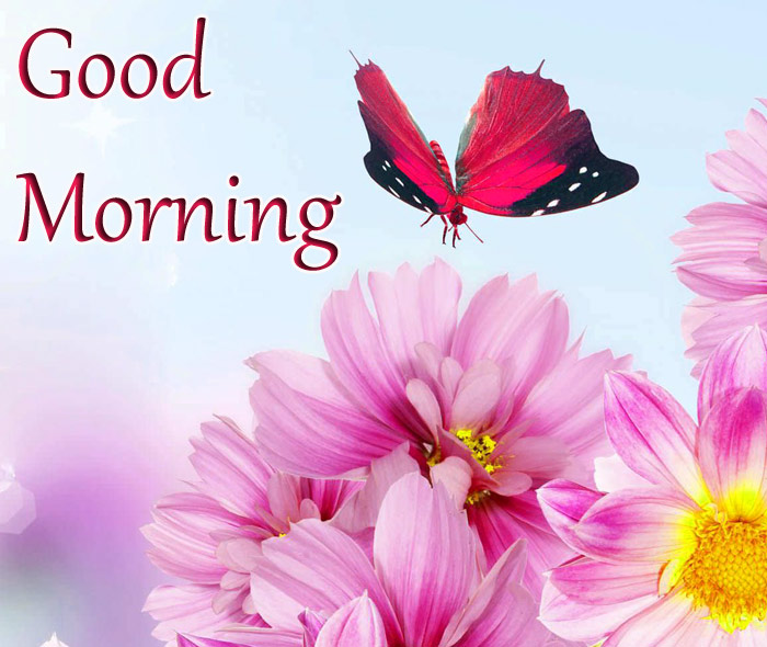 Good Morning witha a butterfly image