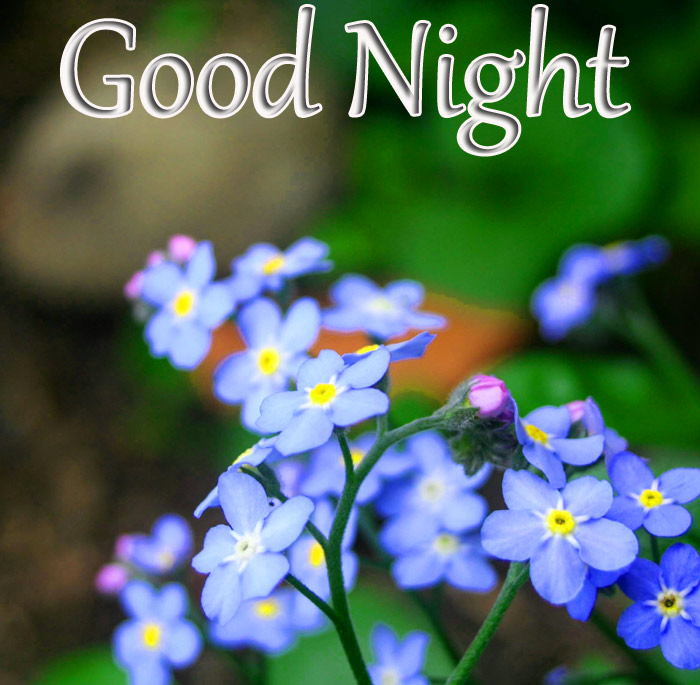 Good Night Images with beautiful blue flowers and nature