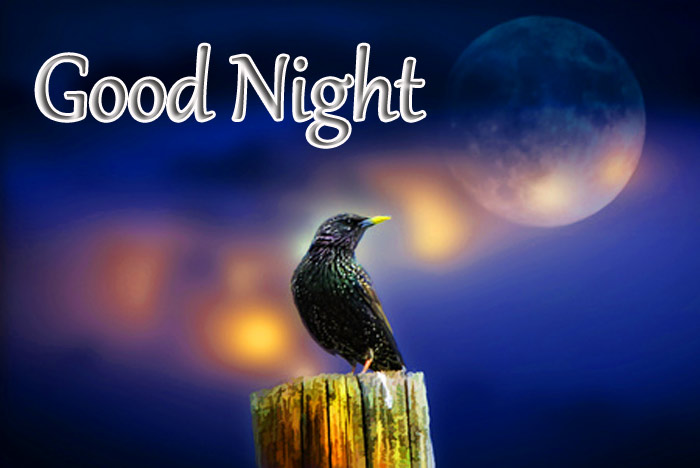 Good Night image with MOON and night bird