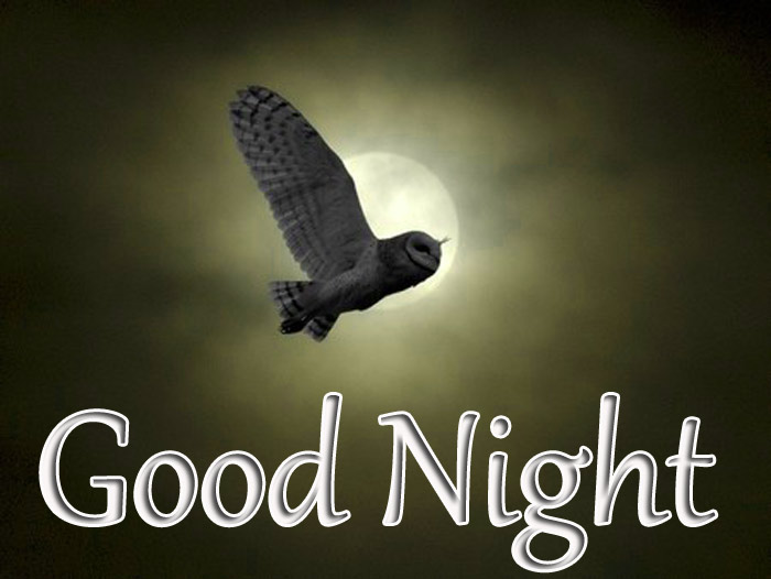 Good Night image with MOON flying owl