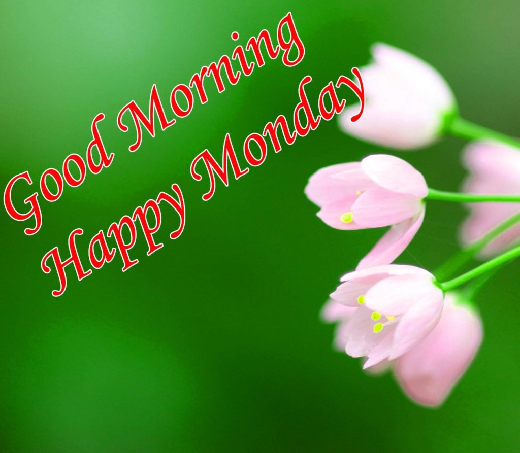 Happy Monday good morning wishes with flowers