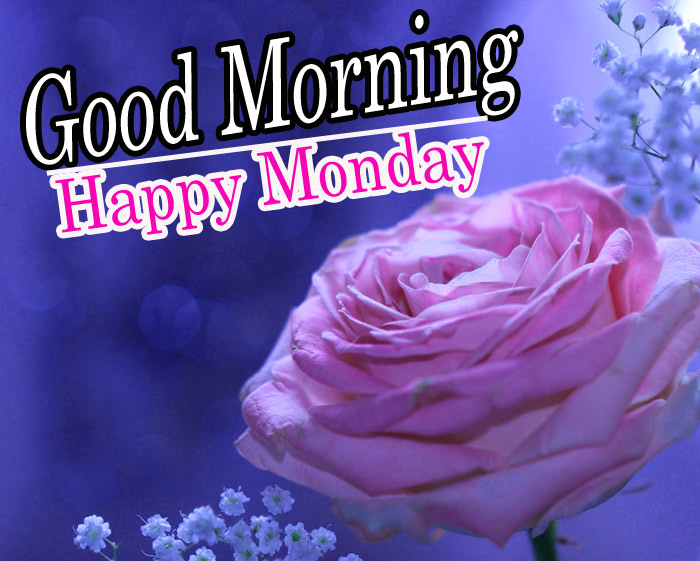 Good morning and happy Monday wishes with pink rose flowers