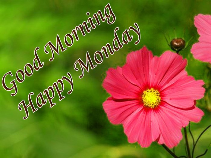 Good morning and happy Monday wishes with red Daisy flower