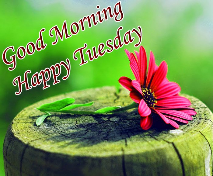 Good morning and happy Tuesday wishes with red flowers on the wood