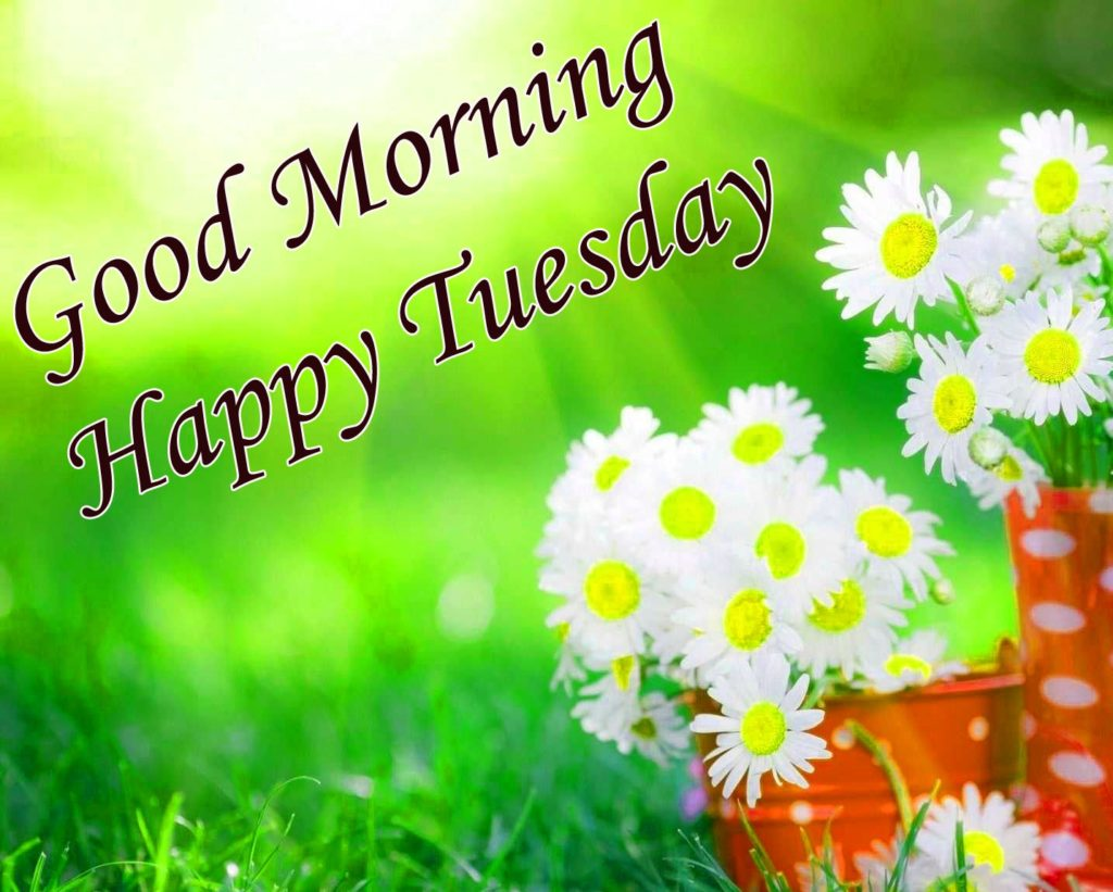 Happy Tuesday good morning wishes with flowers