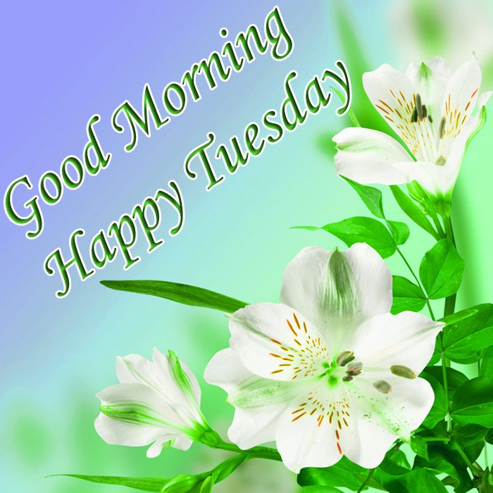 Good morning and happy Tuesday wishes with white flowers and green leaf