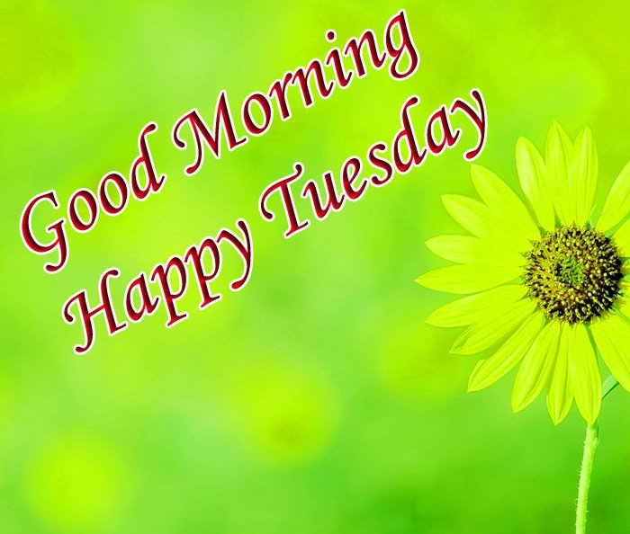 Good morning and happy Tuesday wishes with yellow flowers