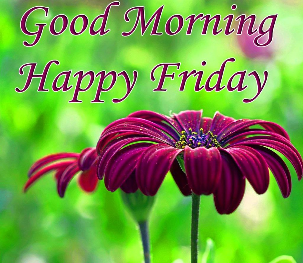 Happy Friday Good Morning Wishes With Flowers Pix Trends