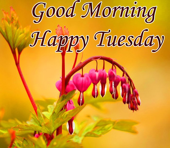 Good morning and happy Tuesday wishes with yellow flowers and green flower