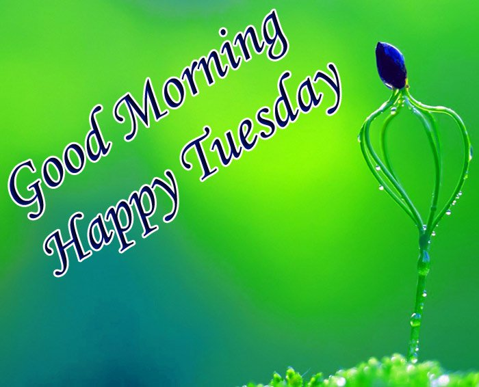 Good morning and happy tuesday wishes with blue flower and green background