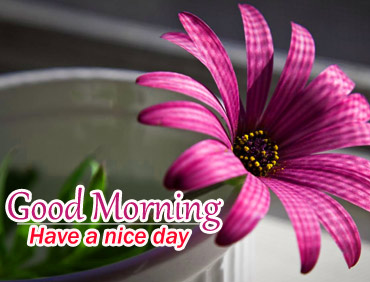 Good morning and have a nice day with pink Daisy flower