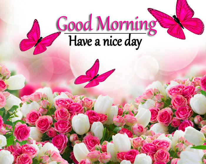 Good morning and have a nice day with pink and white rose flower