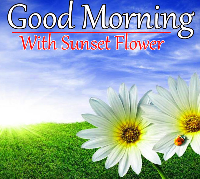 Good morning and have a nice day with sun flower - Calendula