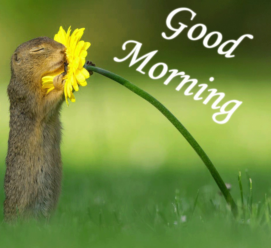 Good morning image with Squirrel Hugging kissing Flower