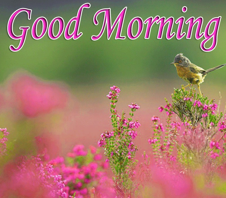Good morning image with a cute little bird on pink flowers