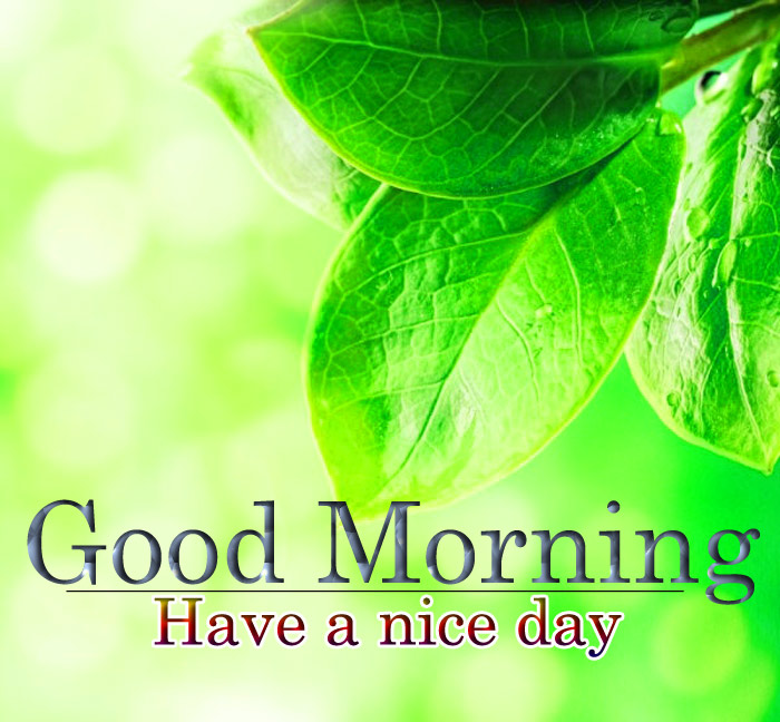 Good morning images with a flowers leaf