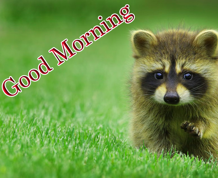 Good morning images with small cute animals bear