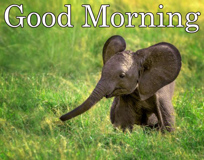 Good morning images with small cute animals elephant