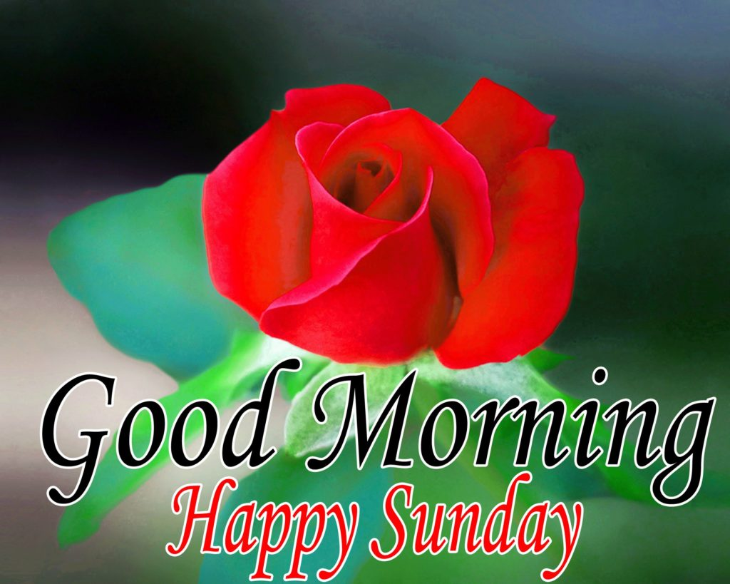 Good Morning images with rose and Happy Sunday