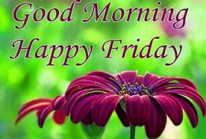 Happy Friday good morning wishes with flowers