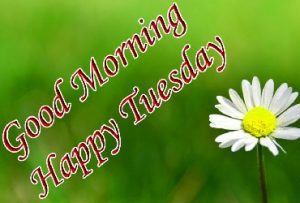 Good morning and happy Tuesday wishes with white flowers and green background